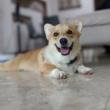 Ah Boys to Men – Dog Training with Porkchop
