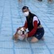 A Chonky Doggo in a Superhero Cape