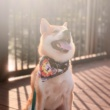Tips for taking memorable outdoor photos of your furkid (without using professional cameras!)