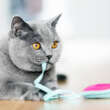 Cat Tricks: Tricks to Teach Your Feline That Can Help You Bond Together