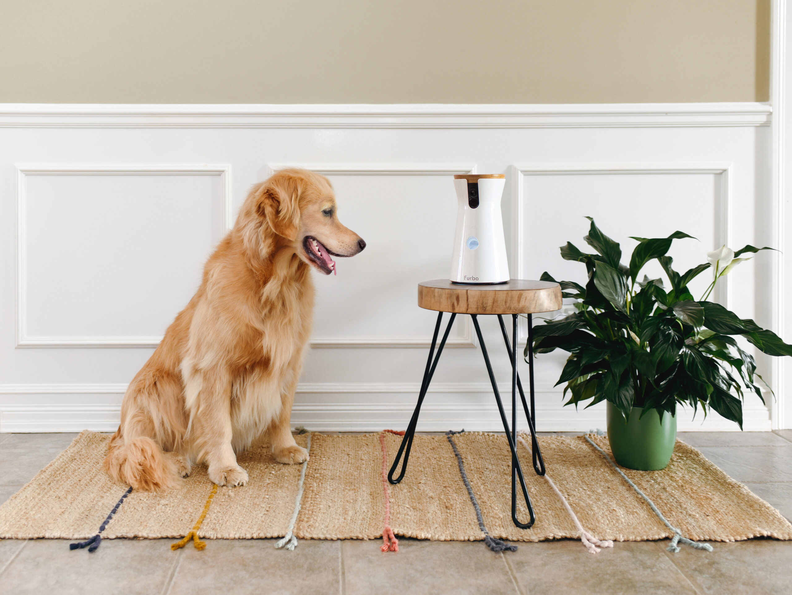 Gift your pet the gift of constant attention with Furbo's Smart Dog Camera